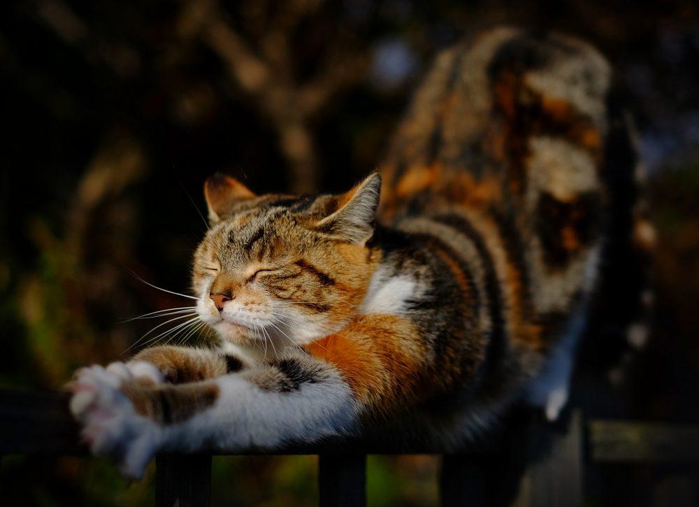 Stretching: 9 Benefits